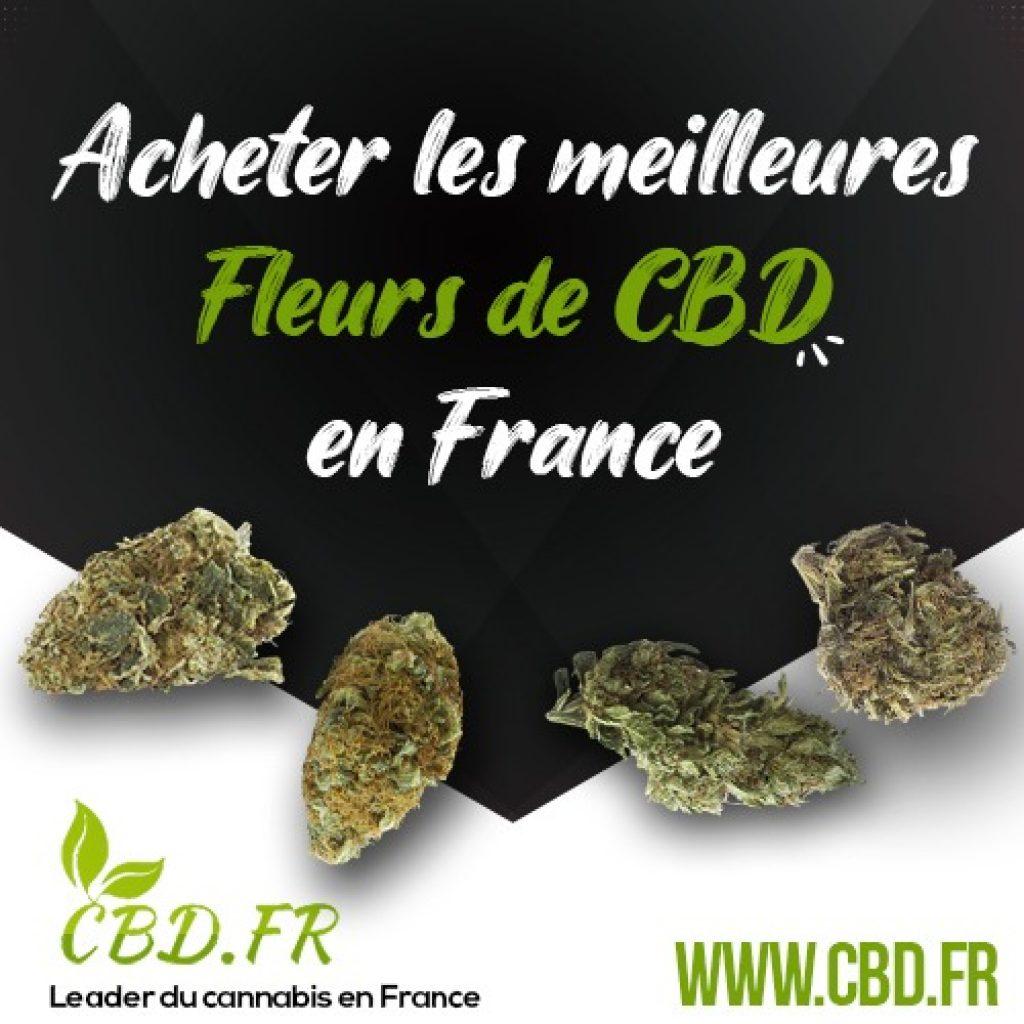 Les meilleures fleurs de CBD sur la boutique CBD.fr