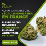 Notre avis sur le site CBD.fr : un des leaders du cannabis légal en France !